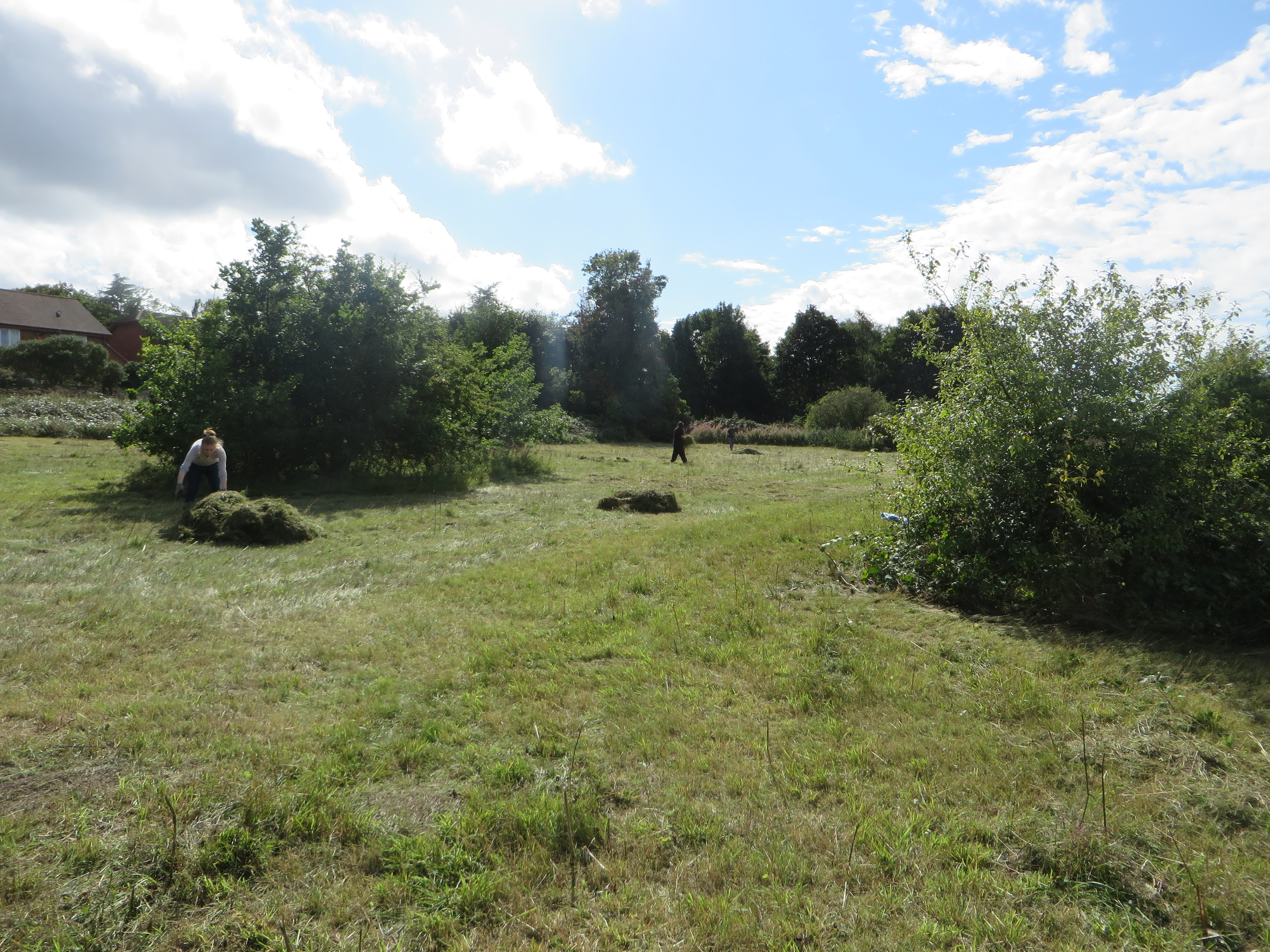 The 'receptor' site with piles of 'green hay' ready for scattering.