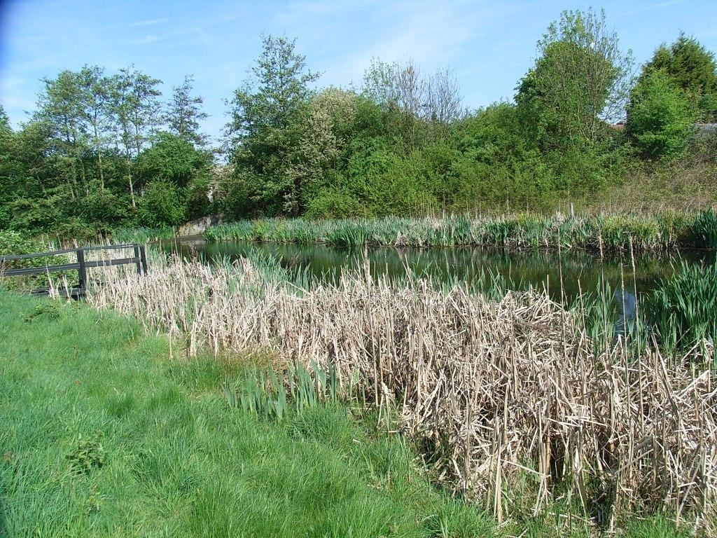 Anton Crescent Wetland LNR
